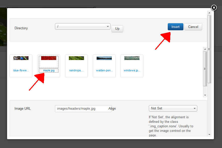 choose-new-image-and-click-insert