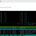 Htop in WHM Terminal
